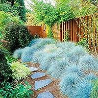 スタジアムヴィラDIY家庭菜園の植物50グラム/パックを踏みつけに耐性SEEDS PLAT会社品質エバーグリーンの芝生バミューダ種