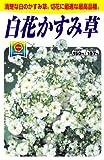 アタリヤ農園 ガーデニング用品 種 白花カスミ草