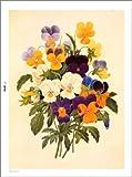 大人の塗り絵―美しい花編 画像