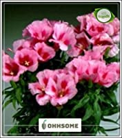 SEED Atlasflowerリトルフリルミックスシーズハウスの種子(パケットあたり20)