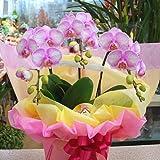 胡蝶蘭 ギフト 生花 3本立ち ミディタイプ 誕生日・お祝い・退職などの贈り物