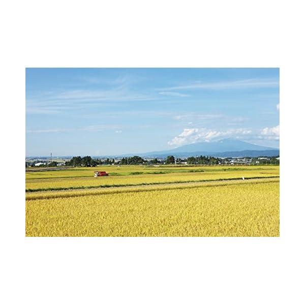【精米】山形県産 白米 つや姫 5kg 平成29年産の紹介画像2