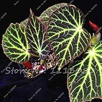 100個ベゴニアの種、鉢植えの花の種、ミニガーデン用ベゴニアの植物、バラエティ・コンプリート、出芽率95%、(混色)