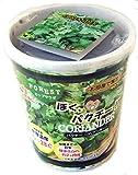 フォレスト カップサラダ ぼくパクチー パクチー(コリアンダー) お部屋で園芸!  種まきセット 栽培キット