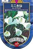 【BULB PLANT】Bulbocodium cantabricus バルボコジューム水仙・カンタブリカス・ポット苗