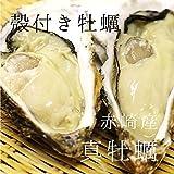 殻付き牡蠣 生牡蠣 生食用カキ | 三陸産 | 特大サイズ 24個 築地直送 かき【赤崎牡蠣30x24個】
