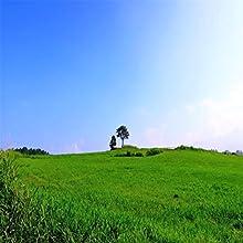 午後の草原
