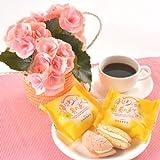 【お花とお菓子セット】リーガース鉢植(薄ピンク)とブッセのセット【お誕生日・お祝い・プレゼント】【お届け日時指定可】