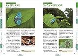 美しい日本の蝶図鑑 画像