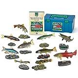立体図鑑リアルフィギュアボックス フレッシュウォーターフィッシュ(日本の淡水魚)