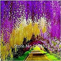 庭のためにセール!100piece 16色の藤の種2015新しい庭の花フォーシーズン播種世界レア花の種子