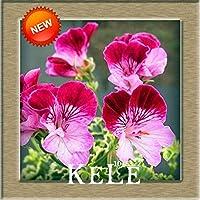 10:ヌエバ・レガダ!20 Unids/パックGeranio Pelargonium Peltatumセミラミスセミラミス・デ・フロレスPerennes、17色Disponibles、#95 Pckp