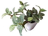 フェイクグリーン フィットニア S (人工観葉植物 光触媒加工)
