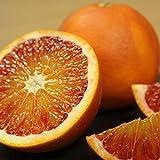 バラ詰 ブラッドオレンジ 約5kg 愛媛県産