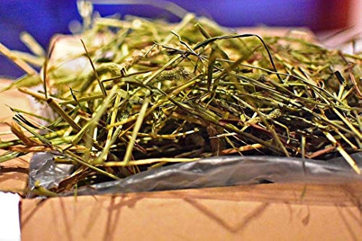 絶対に嘆く遠足業務用【令和元年新刈り】スーパープレミアムチモシー 1番狩り ダブルプレス (うさぎ モルモット デグー チンチラ などの草食動物の牧草) (5kg)