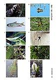 2019年度 生物分類技能検定 試験問題集 3級・4級 画像