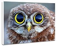 壁掛け式ポスター ノウフレーム絵画 部屋インテリア絵画(60cmx40cmx2.5cm)動物 - 面白いフクロウ