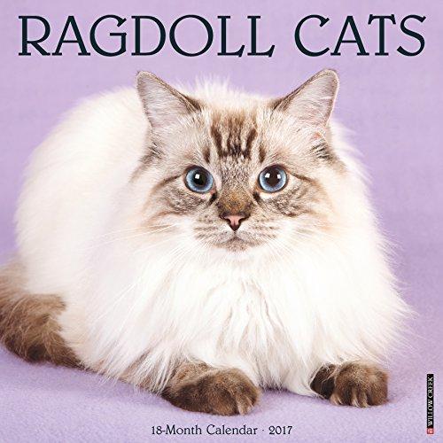 Ragdoll Cats 2017 Calendar