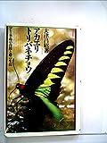 アカエリトリバネチョウ―マレー半島の自然と蝶の生活 (1981年)