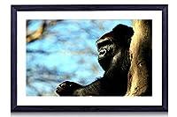 樹上に休むゴリラ動物 - #30511 - 黒の実木枠 壁掛け モダン インテリア アート 風景画 装飾 壁飾り 部屋の装飾 写真 ポスターー - 50cmx35cm
