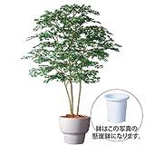 エフプランター 人工観葉植物-ヤマモミジ株立 GREEN-200-10号鉢-懸崖鉢