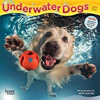 Underwater Dogs 2020 Calendar