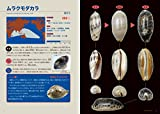 タカラガイ・ブック(改訂版)ー日本のタカラガイ図鑑ー 画像
