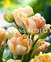 Virtue 50 pcs Tulip Bonsai Mixed Tulip Flower Plant Indoor Bonsai Plant Flowers, Plant for Home & Garden Easy to Grow: 9