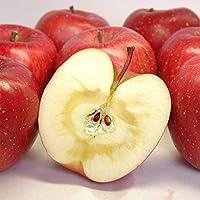 りんご 3kg 長野県 平均糖度13度前後 長野県産 サンふじ 西村青果