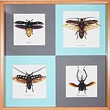 NatureScience 昆虫標本セット 世界の昆虫たち NS-SP-561