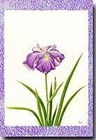 花のポストカード 花菖蒲