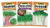 日本農産種苗 種(野菜) スプラウト(かいわれ) ...