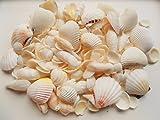 天然素材 ホワイトシェル 白い 貝殻セット 500g ハワイアン ディスプレイ インテリア ブライダル クラフト 工作 手作り 材料