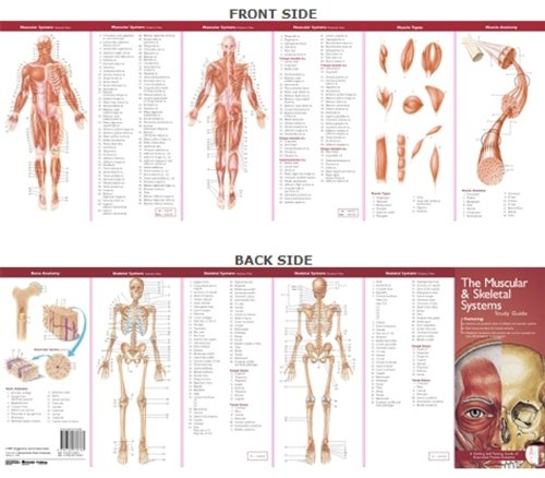 Download Anatomical Chart Company's Illustrated Pocket Anatomy: The Muscular & Skeletal Systems Study Guide 0781776783