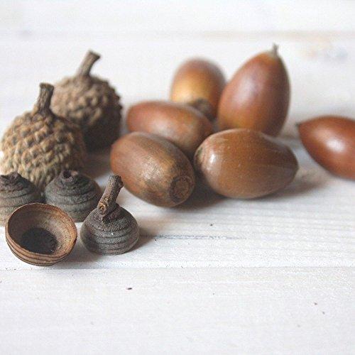 石原商事 ミックスどんぐり(木の実)50個 自然素材 国内産 木工 クラフト