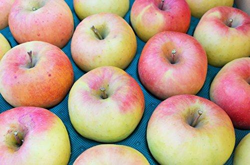 長野県産 生産農家直送りんご 「名月」 中級ランク ご贈答&自家用向き 10〜18玉 約5kg入り/箱