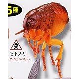 カプセルQミュージアム 衛生害虫博覧会 身近に潜む生活害虫 [5.ヒトノミ](単品)