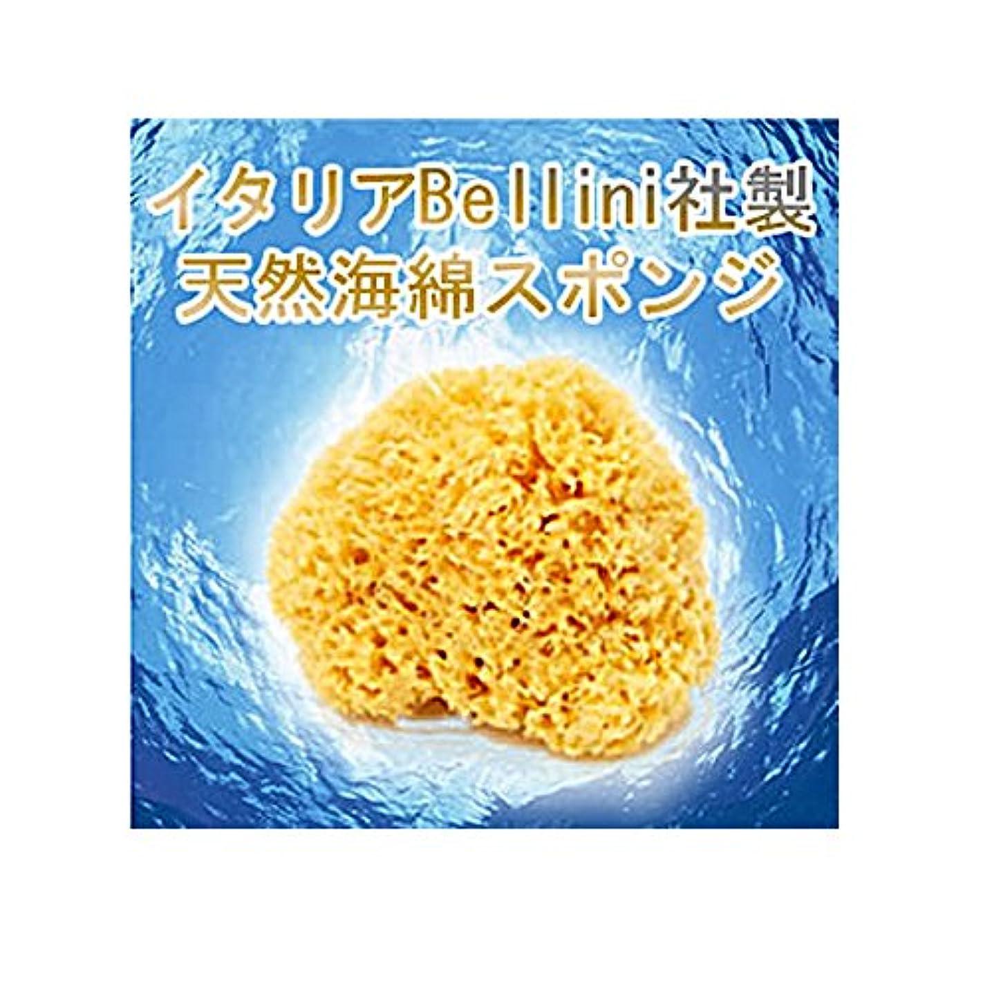 カポックいつでもむしゃむしゃイタリア産最高級天然海綿ハニコム種(16cm)