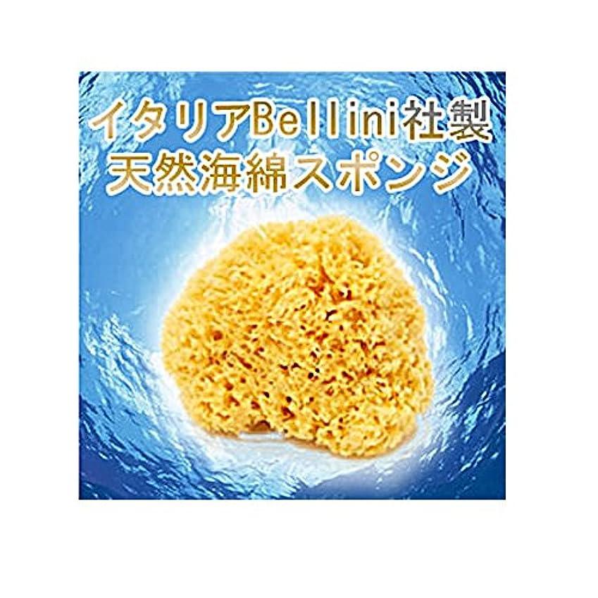 狭いポット避けるイタリア産最高級天然海綿ハニコム種(16cm)