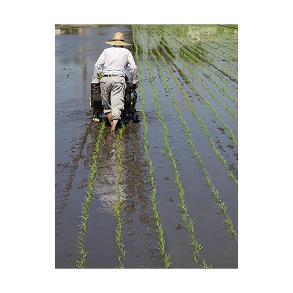 【精米】新潟県 北越後産 特別栽培米 白米 こ...の紹介画像9
