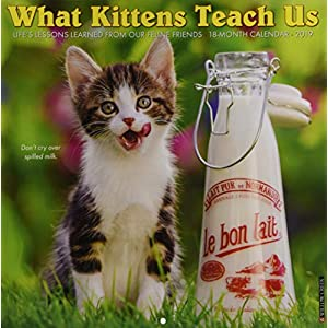What Kittens Teach Us 2019 Calendar