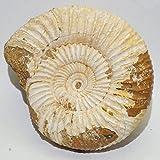 アンモナイト(ペリスフィンクテス) 60g