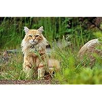 ふわふわの猫の動物 - #30968 - キャンバス印刷アートポスター 写真 部屋インテリア絵画 ポスター 90cmx60cm