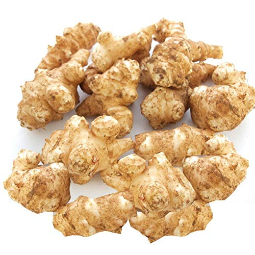 菊芋 無農薬栽培  2kg