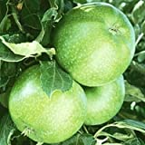 Granny Smith Apple tree 10 seeds by Tropical Oasis