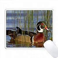ウッドダック、Aixスポンサー、湿地の男性、米国イリノイ州マリオン。 PC Mouse Pad パソコン マウスパッド