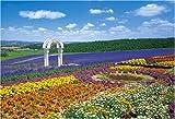300ピース ジグソーパズル 花の咲く丘-富良野 (26x38cm)