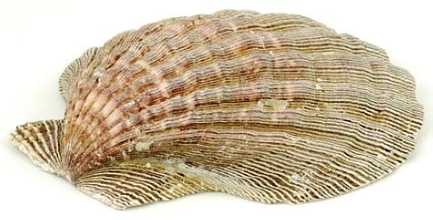 スイッチ策定するポップ香炉Lion Paw Ocean Sea Shell Burn Cones Resins Hold Smudge Sticks瞑想ツール5