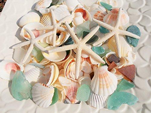 天然素材 A品 ヒトデ 4P 白い 貝殻 シーグラス セット...