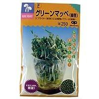 スプラウト 種 スプラウト グリーンマッペ(緑豆) 小袋(約60ml)